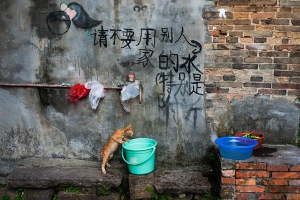 引体向上作品:小猫取水