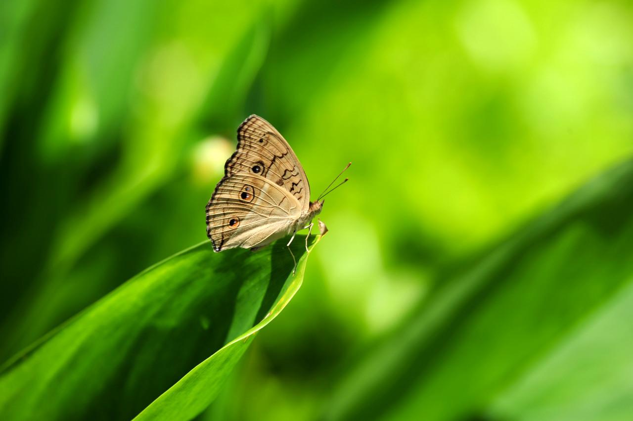 jaihong作品:蝴蝶