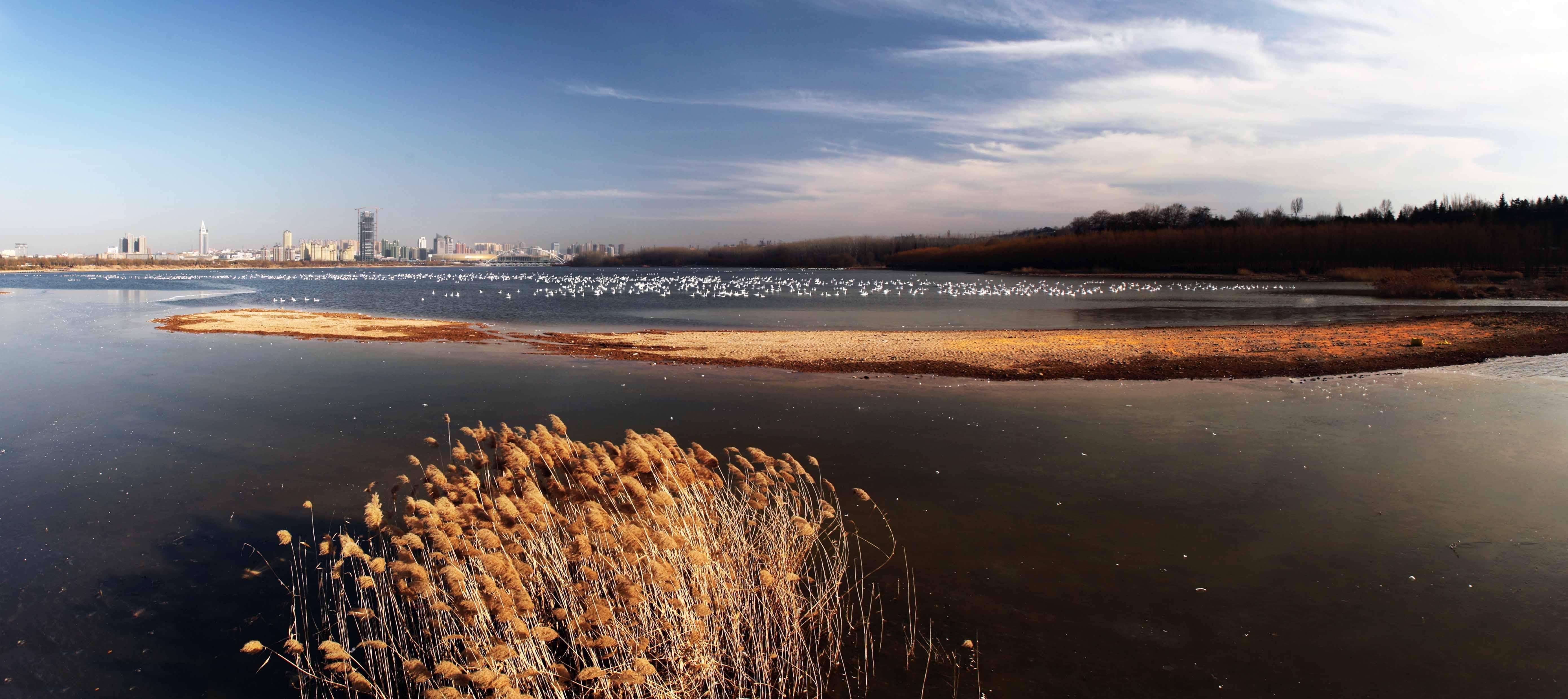 jiaowei0168作品:天鹅湖