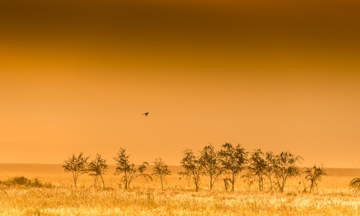 老捷作品:草原的早晨