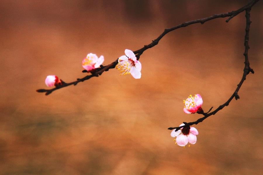 漫步春天作品:春韵