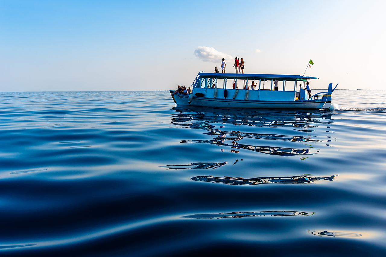 既济未济作品:海豚探索之旅