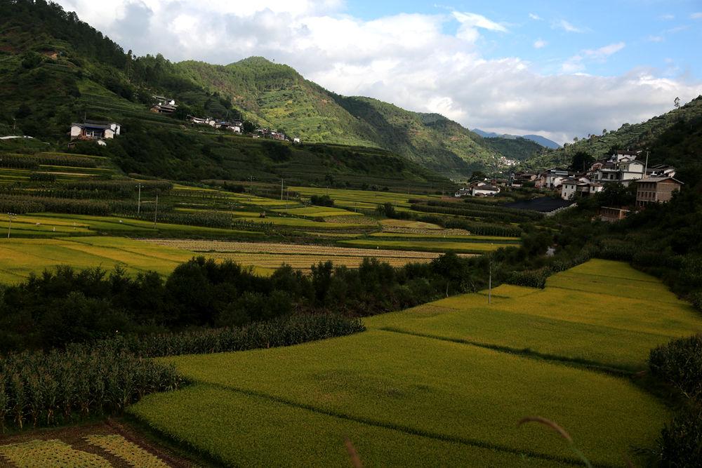 秋天里的田野是那样的充满着丰收的喜悦 -zl80953摄影作品 金色田野