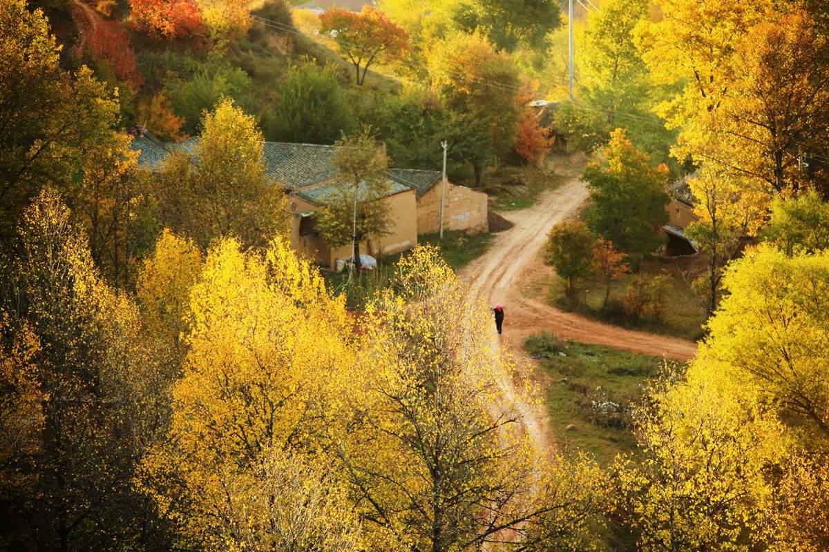 zxz0877作品:晨光中美丽的村庄