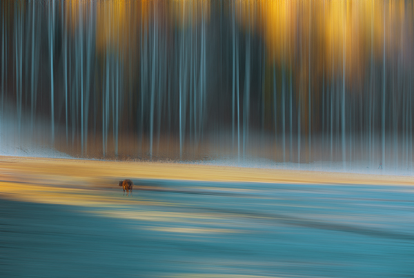 牧狼人1作品:匆匆而过的秋