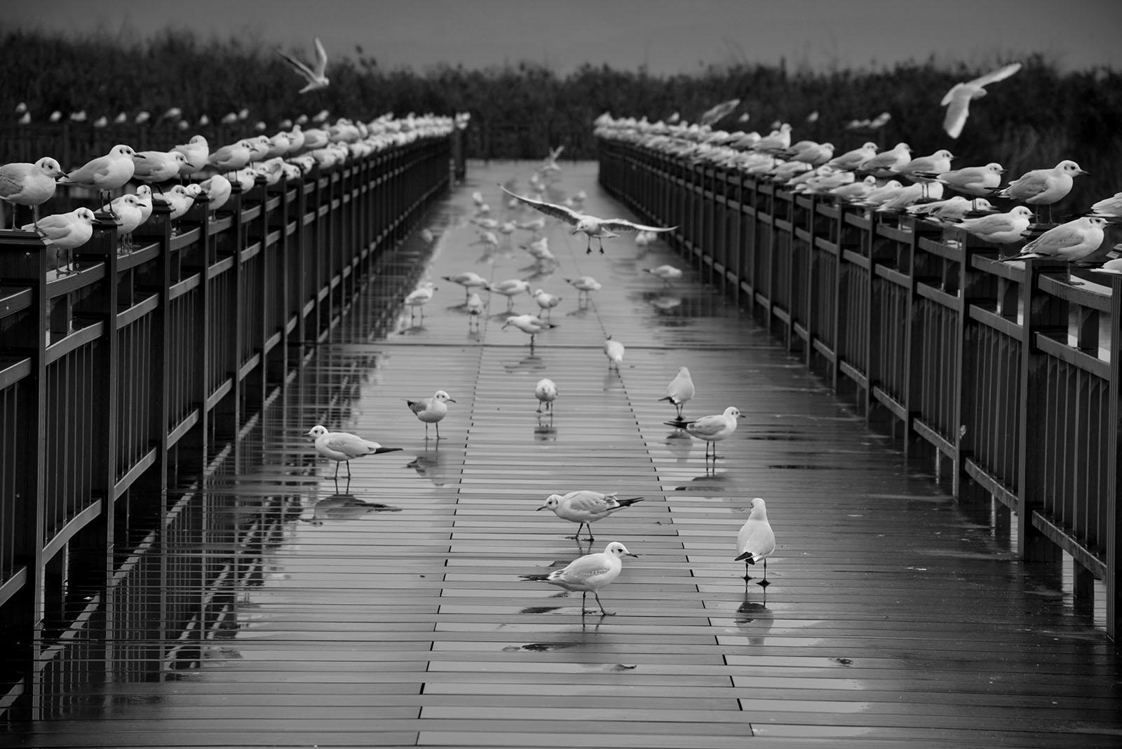 兰色海作品:鸥