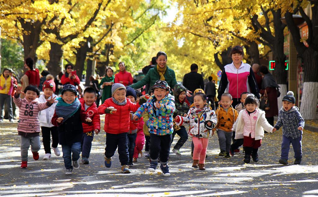 秋天的银杏树叶一片金黄,吸引着很多摄影家和市民拍照,共同融入在