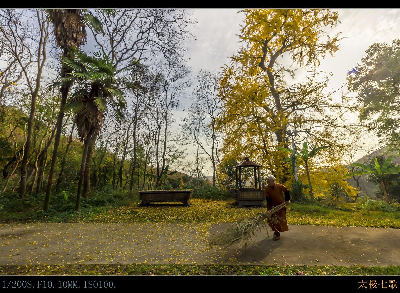 坐寺庙的和尚在一棵有着1300年的银杏树下扫地正好我抢拍了这张