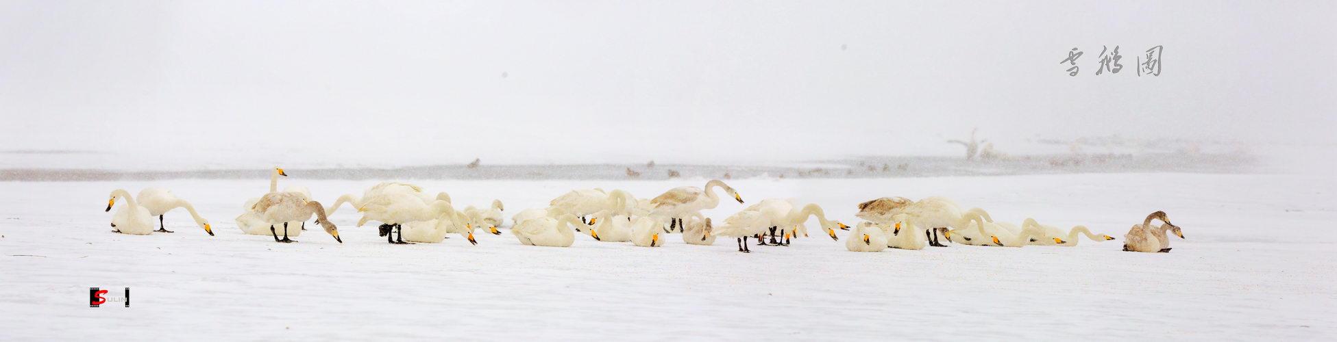 sdsulin作品:超宽幅天鹅湖