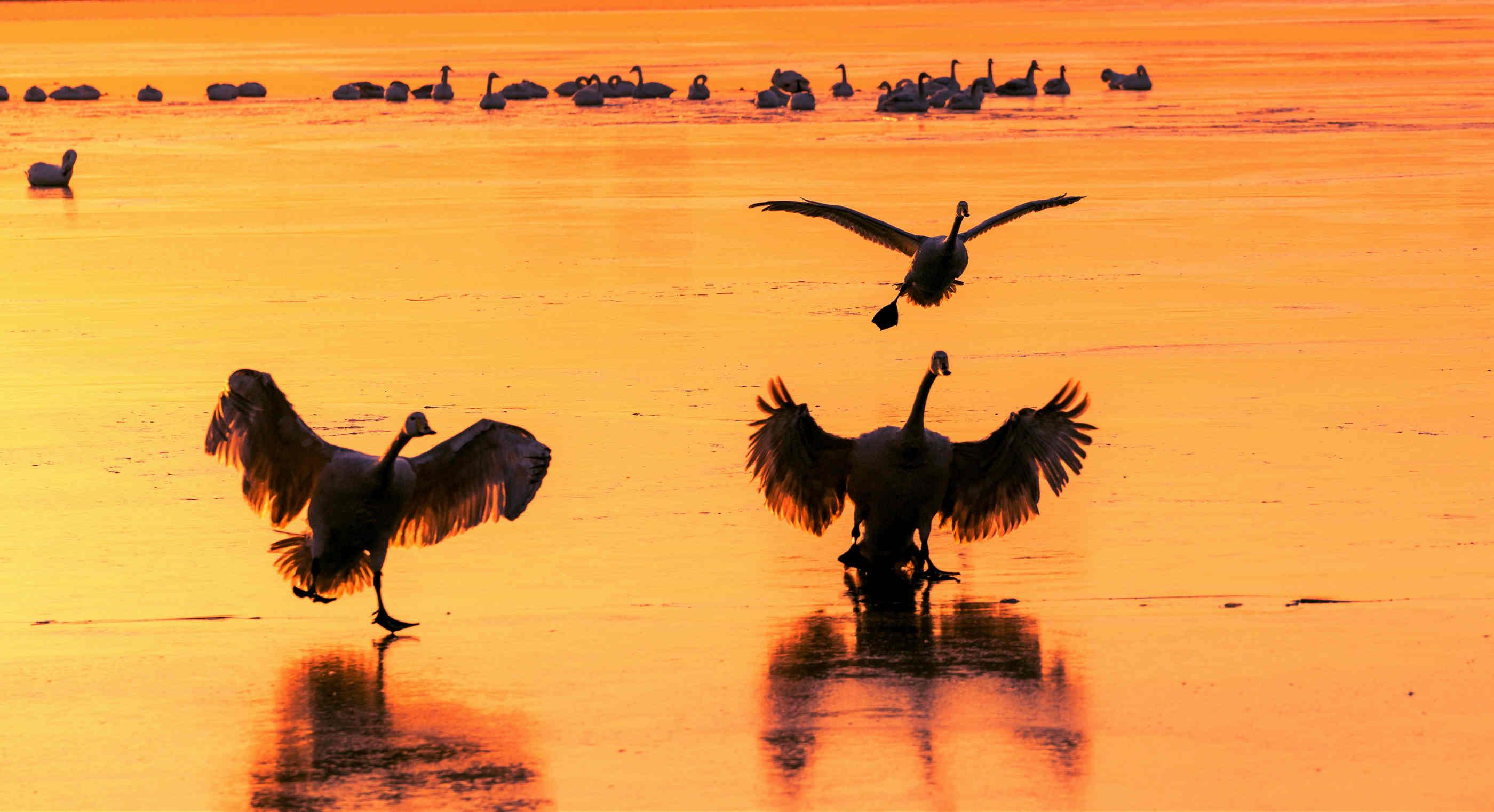 江河湖海潮作品:翩翩起舞