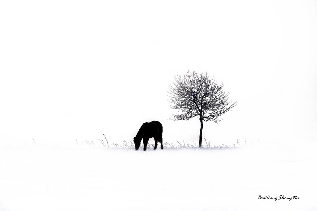 被动声纳作品:冬