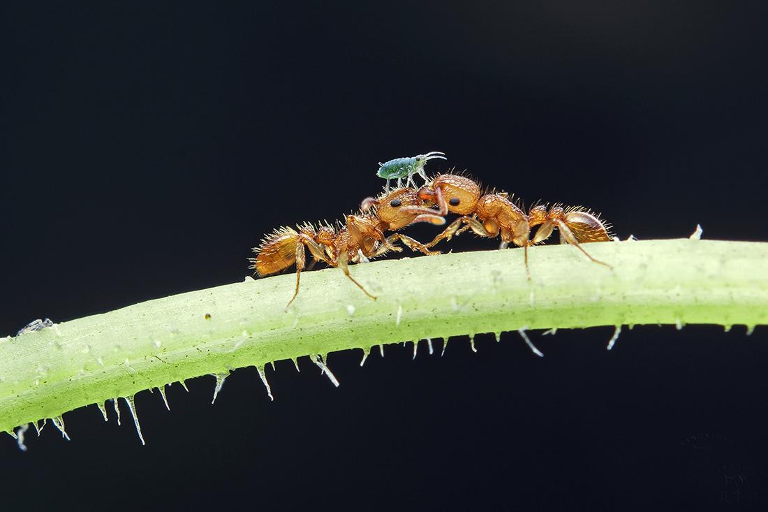 相约而行2015作品:蚁背趣事