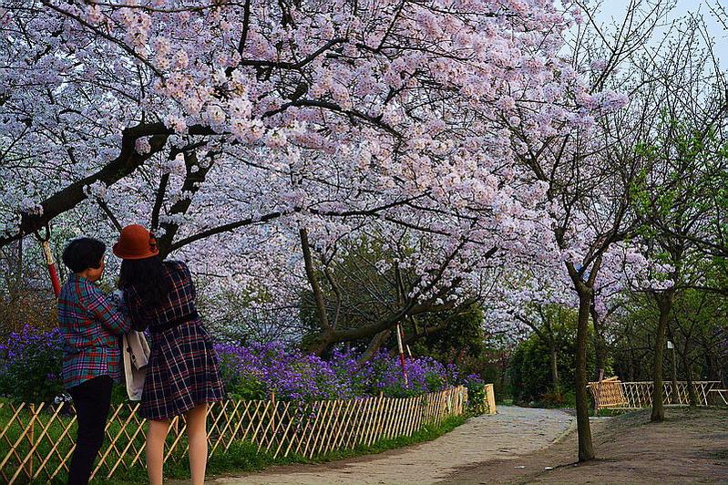 水墨禅心作品:春色