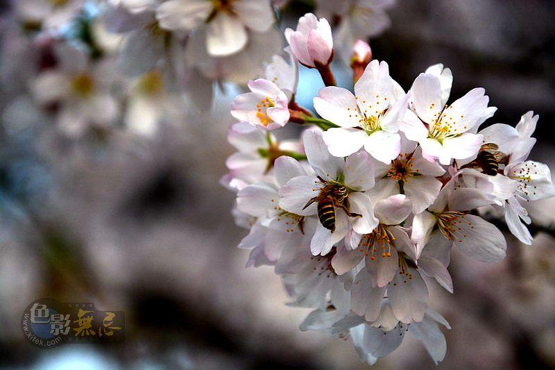 水墨禅心作品:春韵