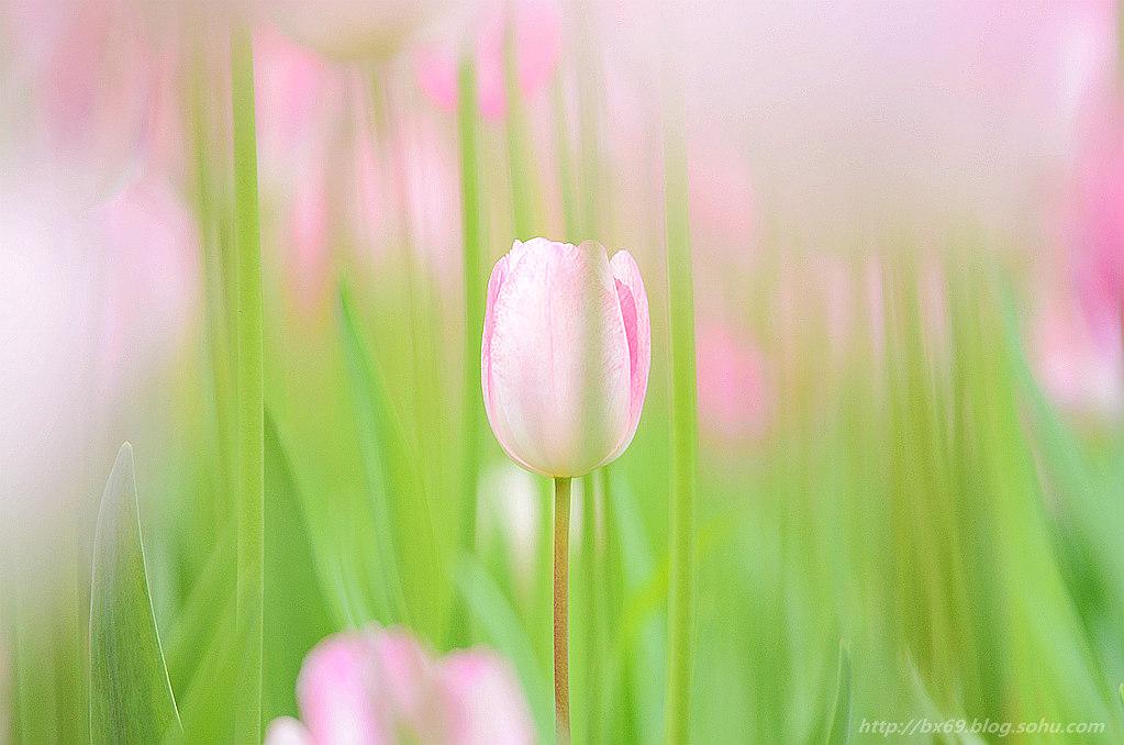 白雪摄影作品:《风韵由花》
