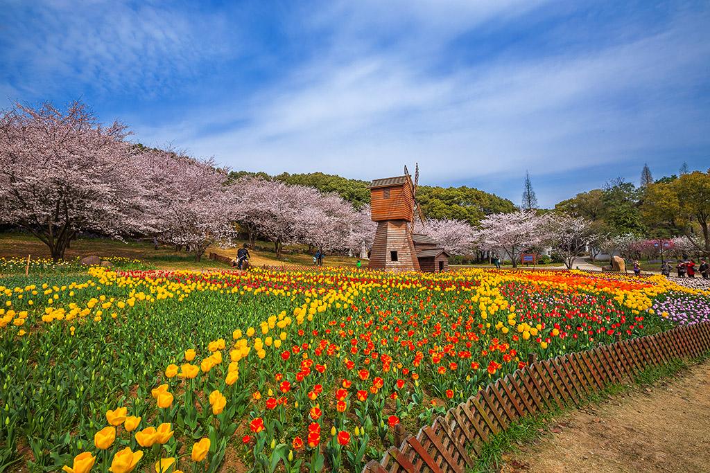 云山诗意11-1511作品:樱花季