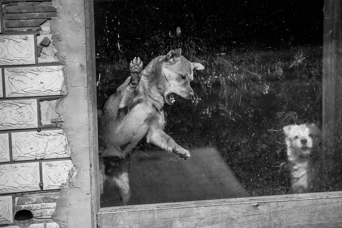 williamweilee作品:长期没人关爱的狗狗