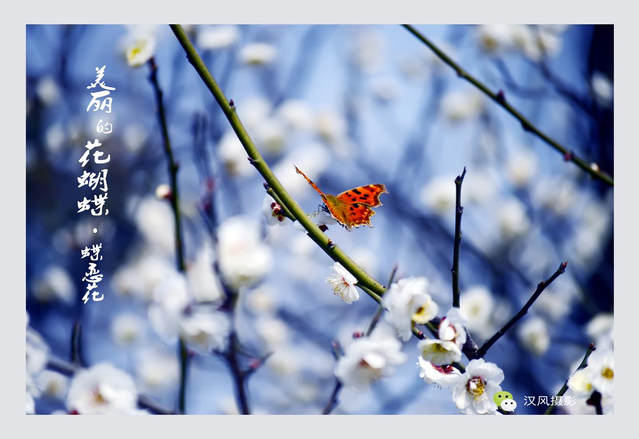 XY汉风作品:蝶恋花
