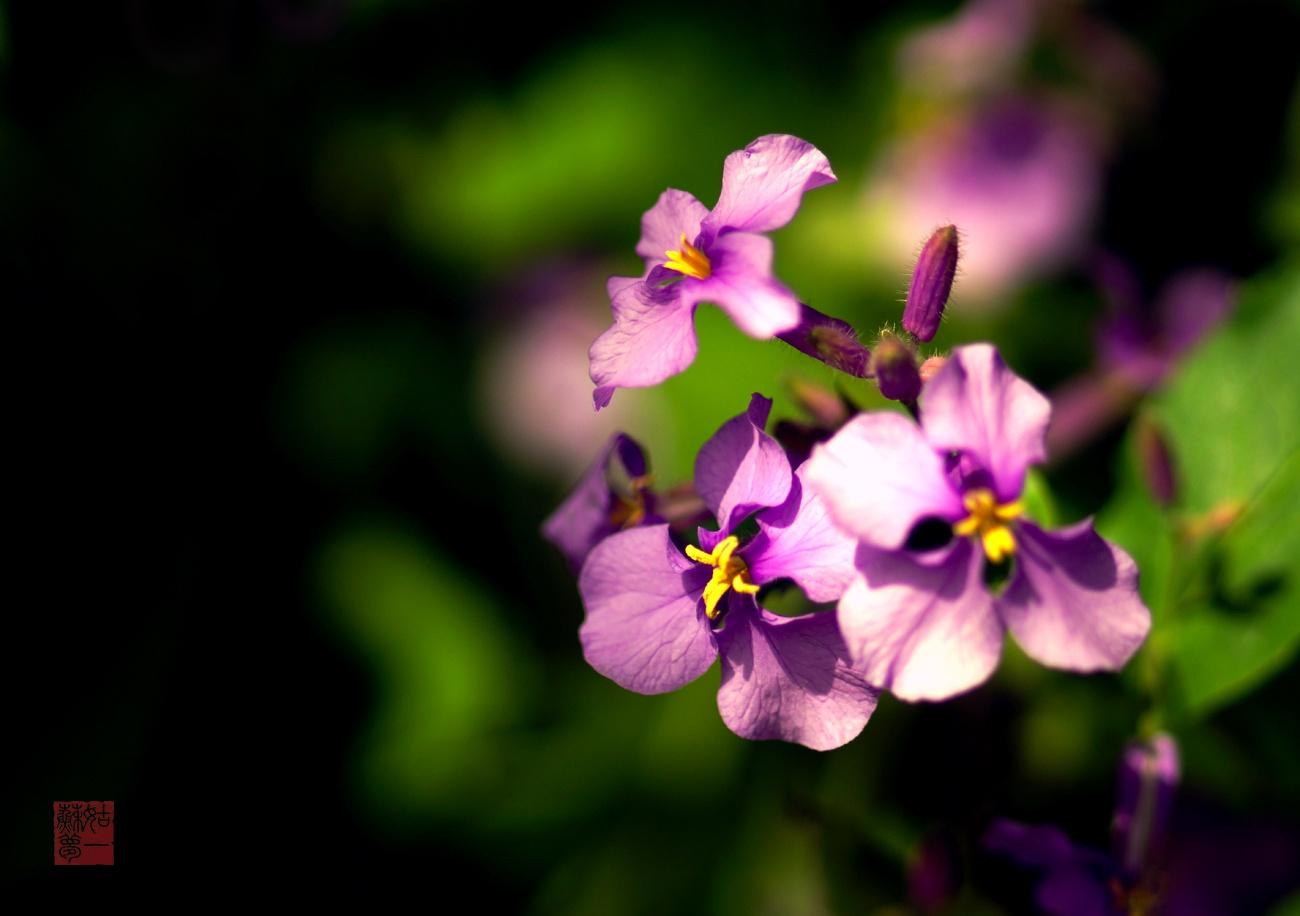 姑苏一梦作品:微距下的朵朵