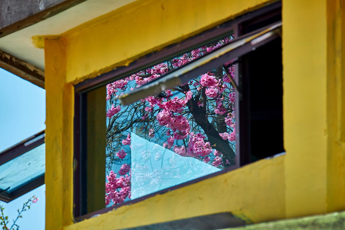 李达明作品:窗外已是春满园