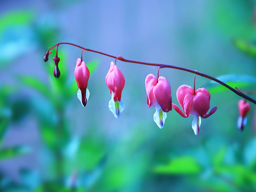 老白兔作品:花