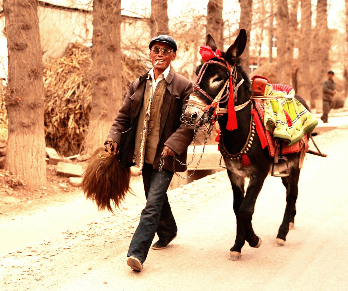 zxz0877作品:西北汉子和他的驴