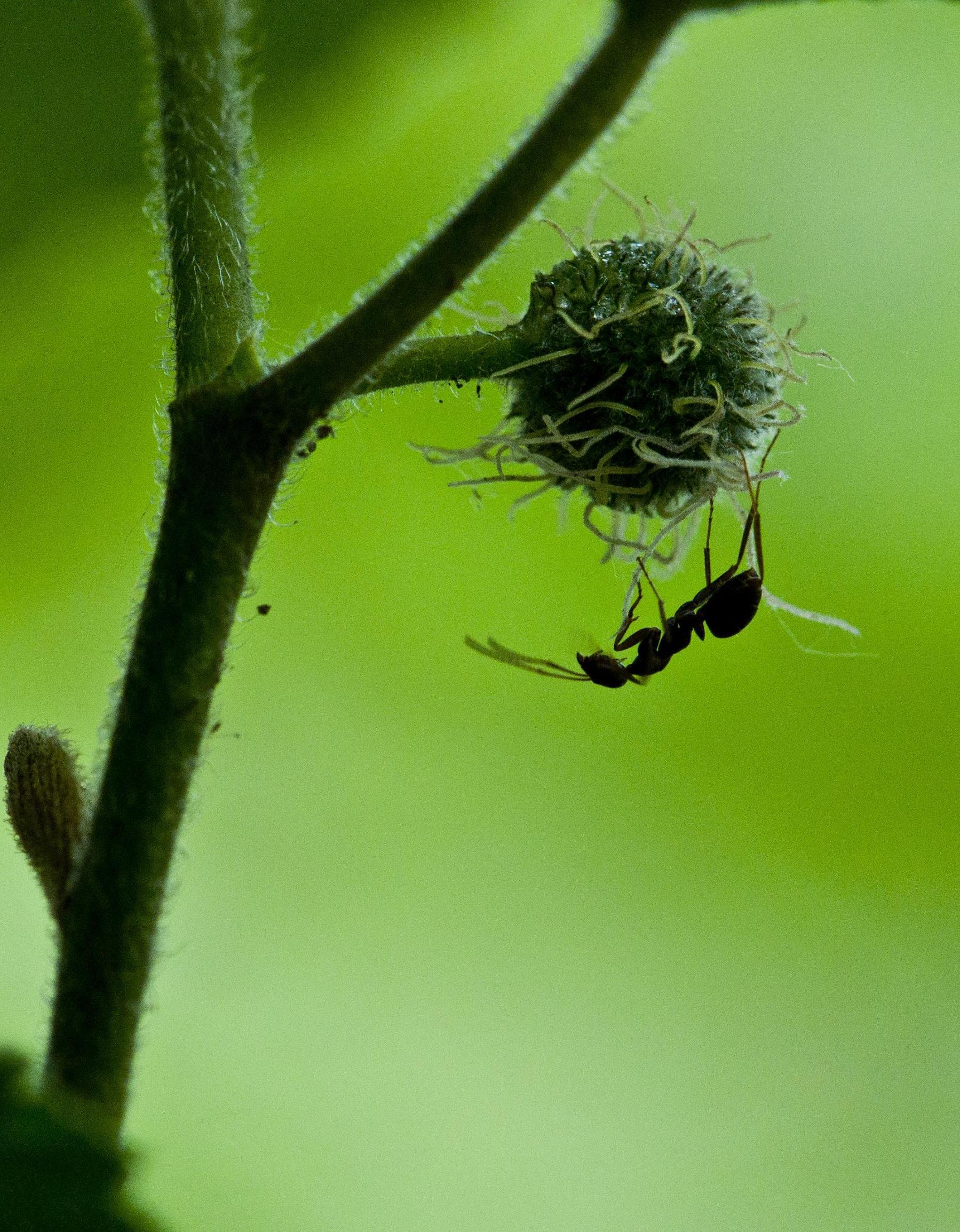 定焦手作品:第一次用百微拍昆虫