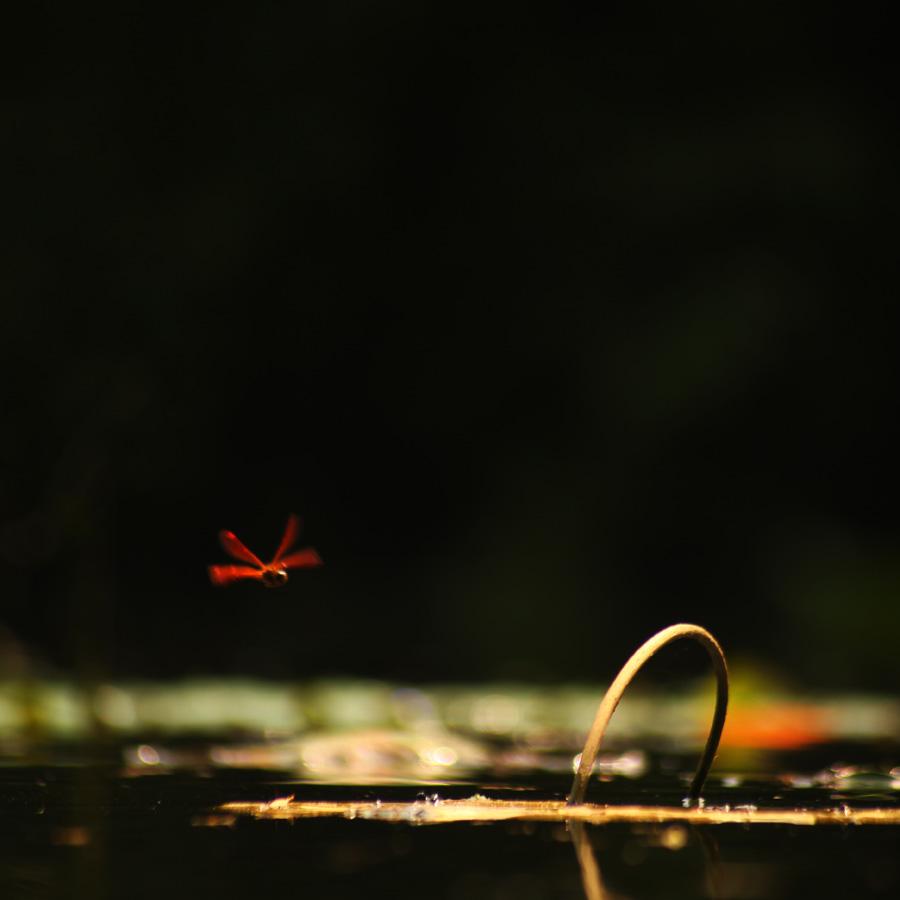一色夫作品:红蜻蜓