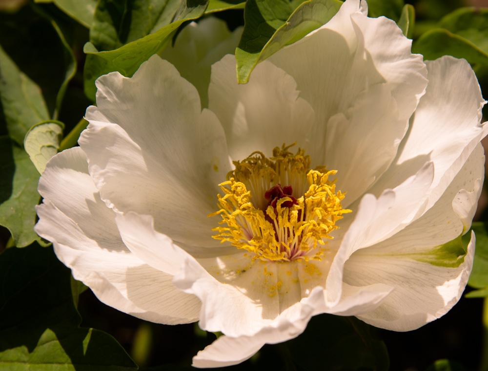 kevin060作品:哈尔滨的花