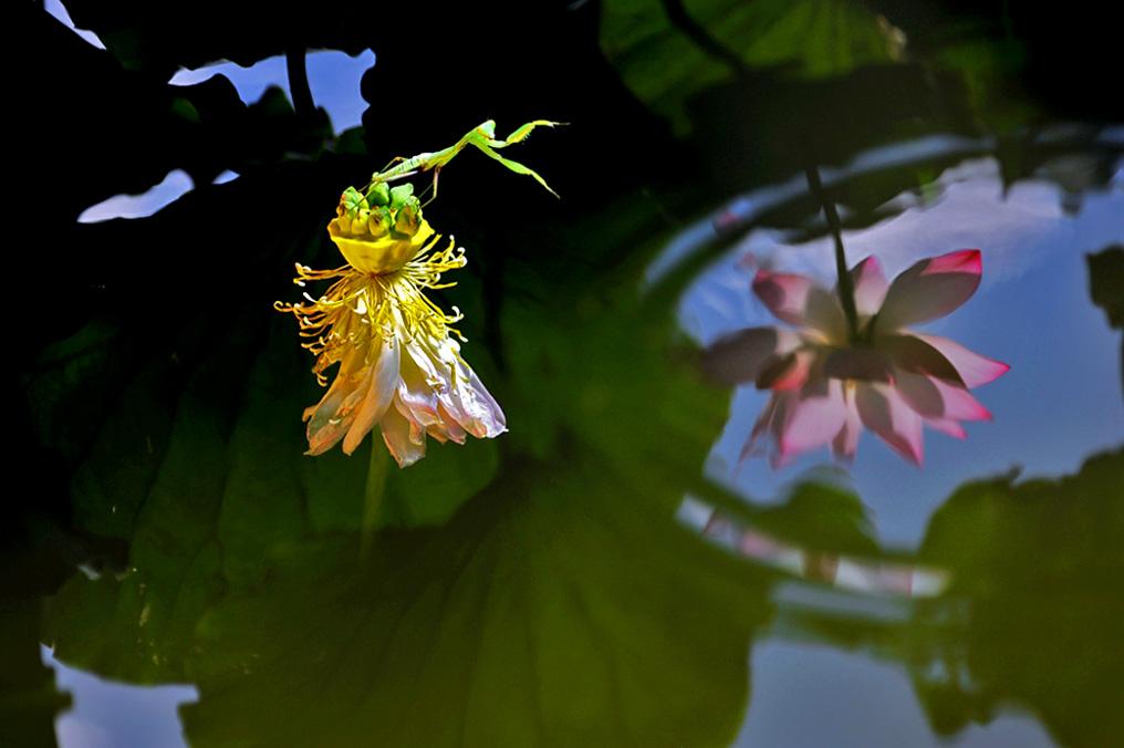 关弓作品:水中花