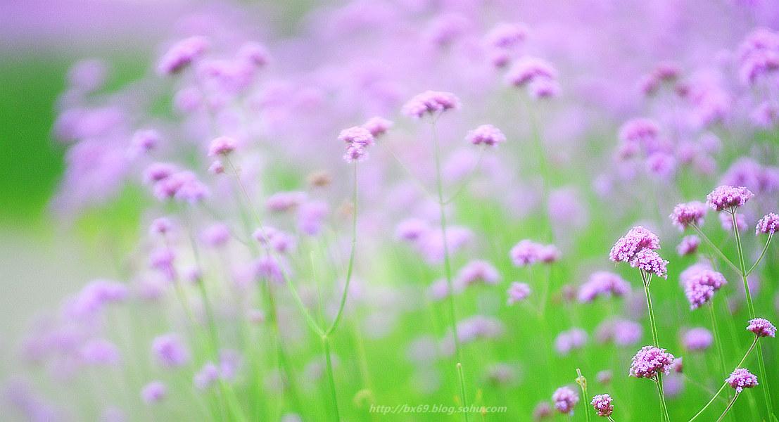 白雪摄影作品:《生如夏花》