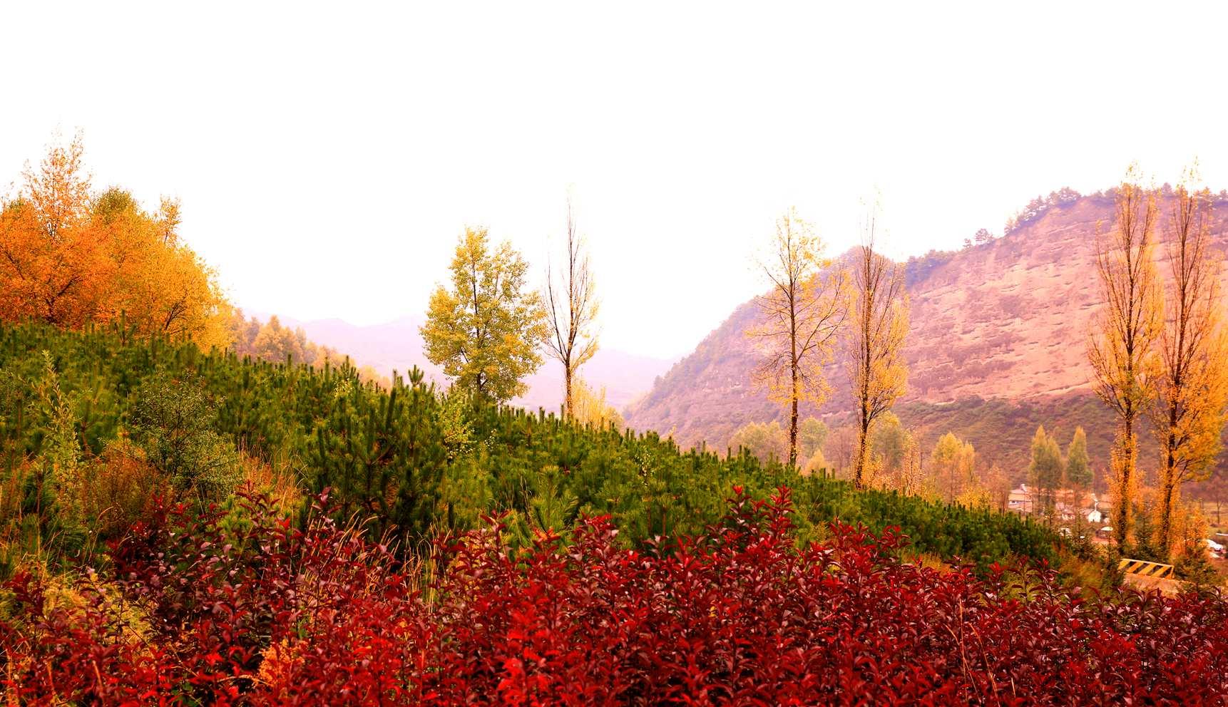 zxz0877作品:秋的色彩