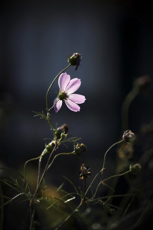 欧阳姐作品:路边的小花