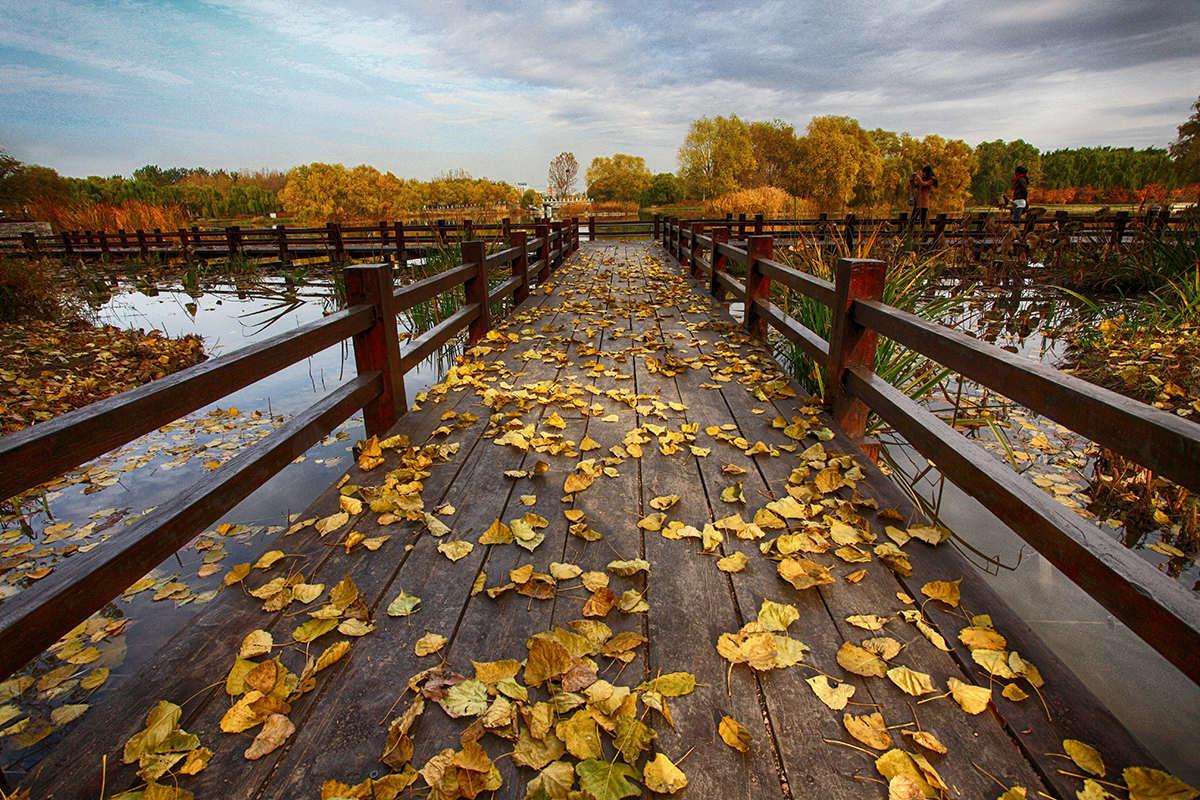 黄赛作品:秋