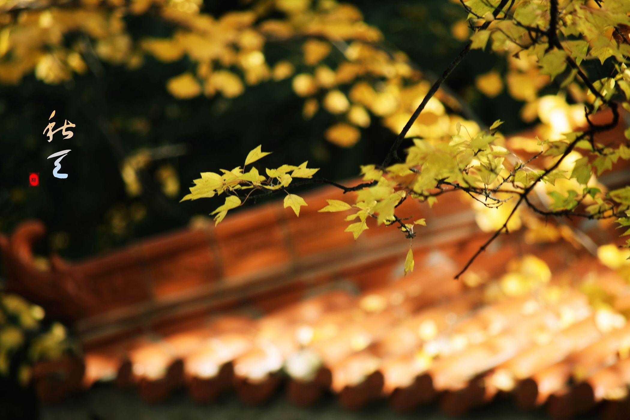 长江0081234作品:秋天