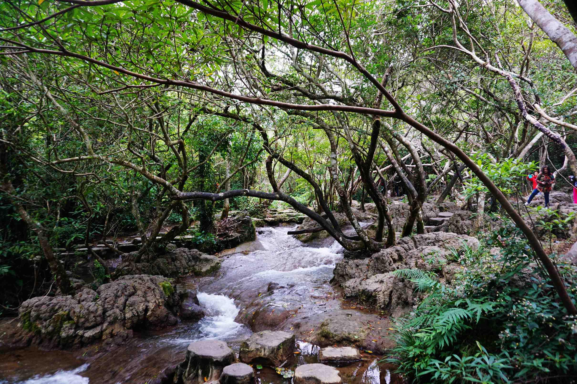 常樂作品:小七孔水上森林景区