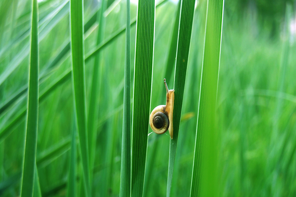 无忌色人作品:小蜗牛