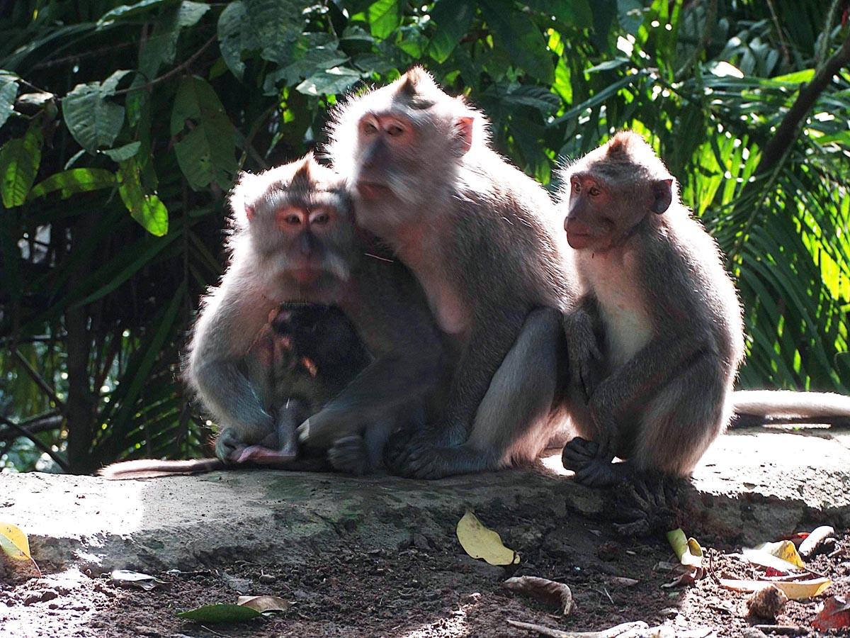 朱宏辉作品:猴子哺乳