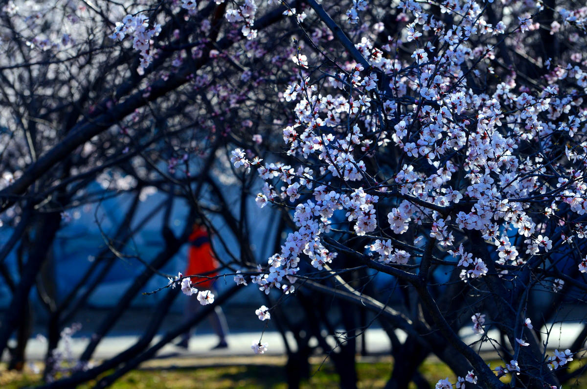 黄赛作品:春天的颜色