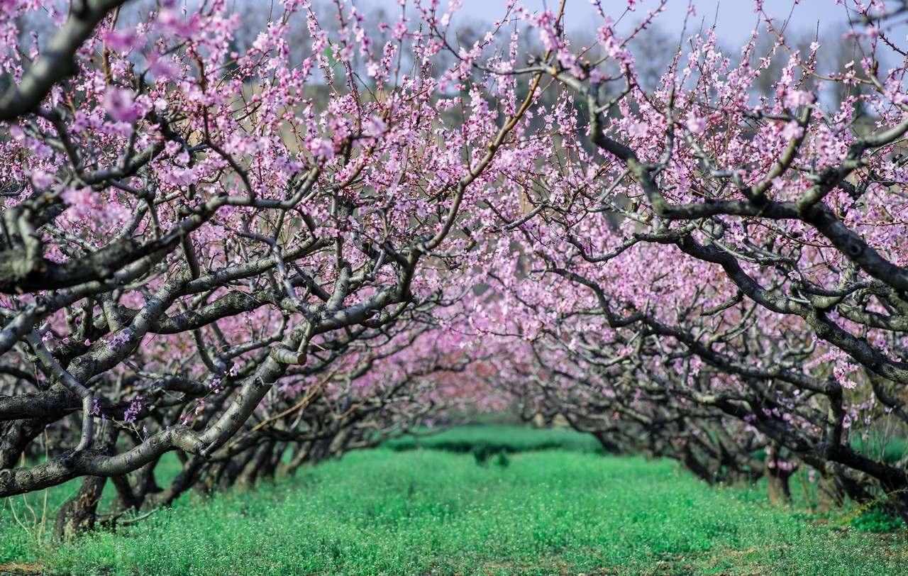 彩虹战士作品:桃花园