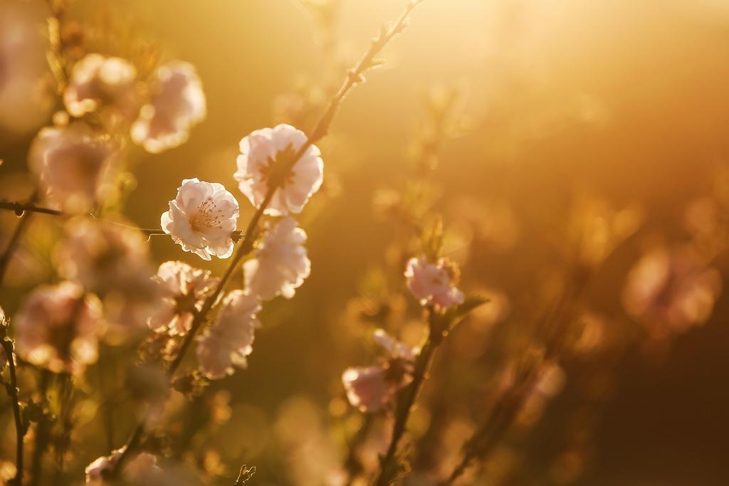 欧阳姐作品:《春》
