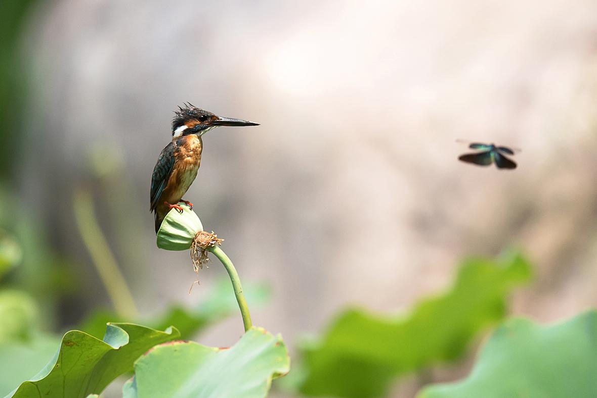 liwong作品:小翠与蜻蜓