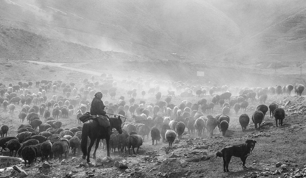 华野四纵作品:牧途