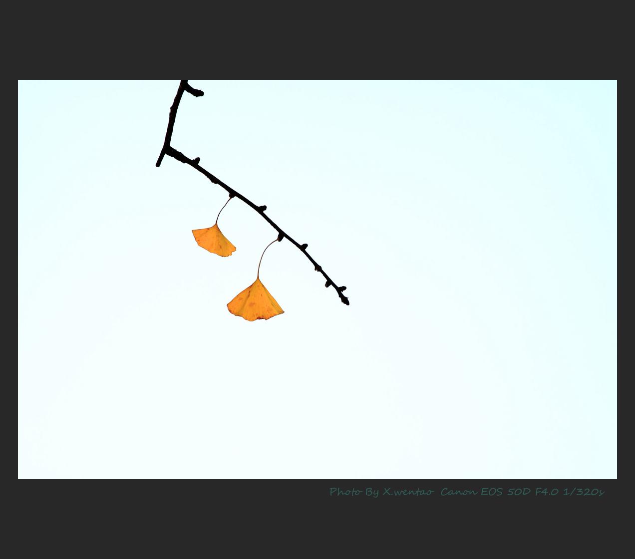 我馭風行作品:银杏叶
