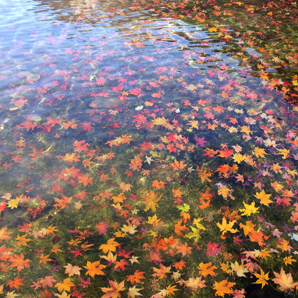 心色彩作品:秋水