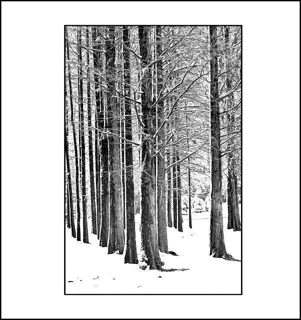 安徽老玉米作品:《那片树林》