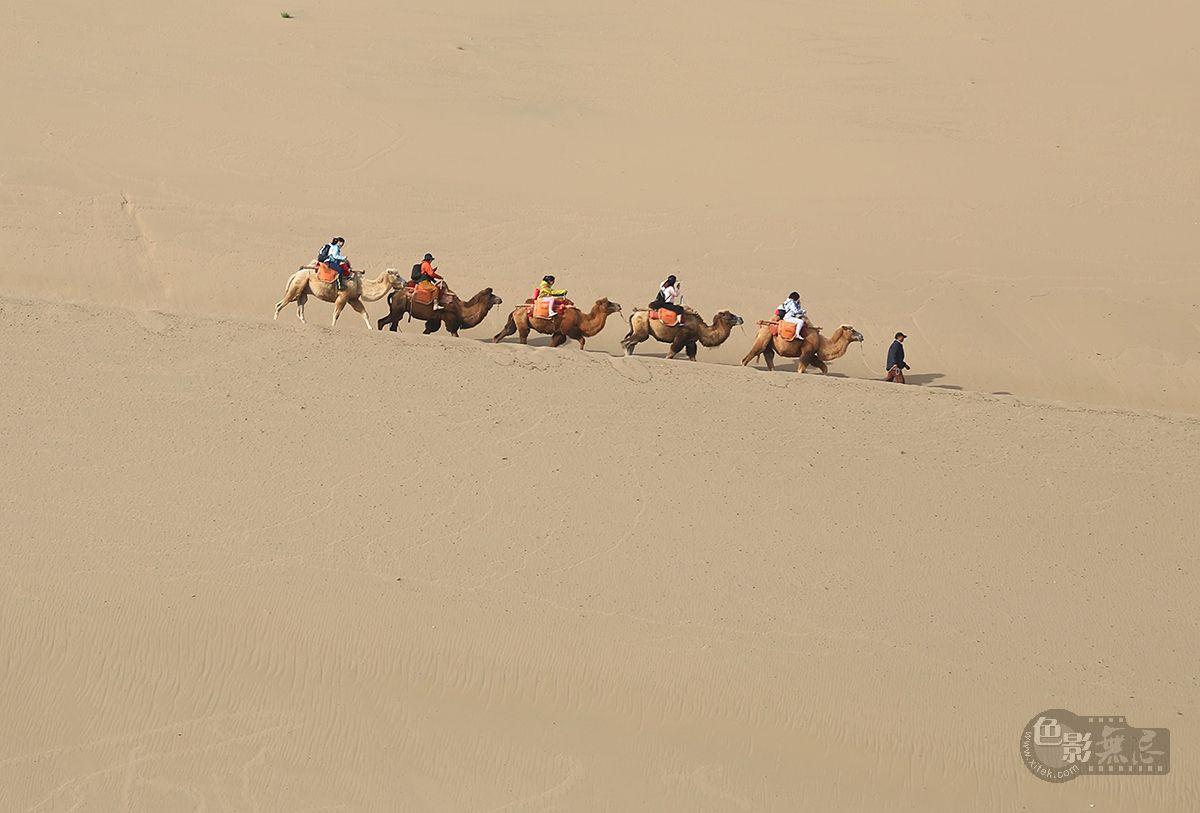 色哥哥作品:漠海驼舟
