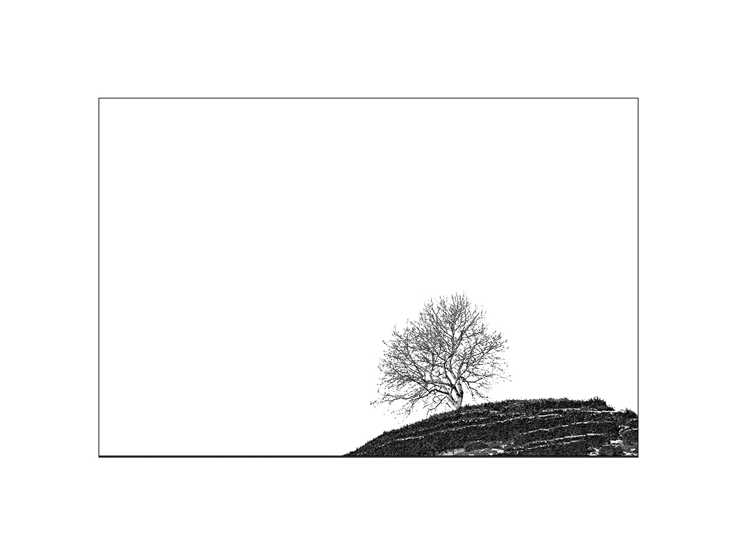 安徽老玉米作品:《山上有棵小树》