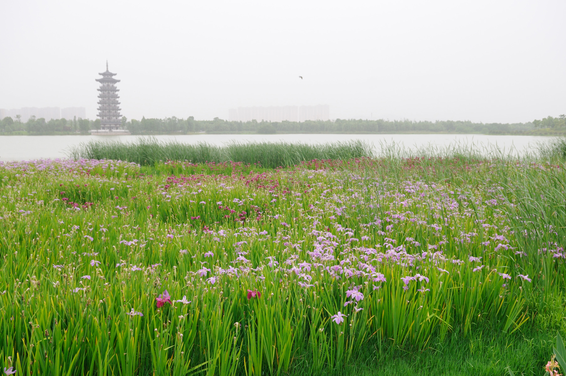 hmeicheng作品:长沙洋湖湿地公园