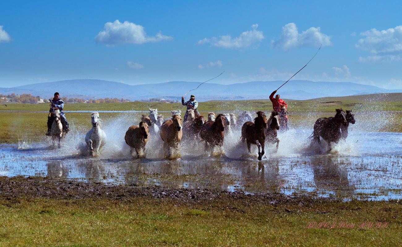 xuliangshey作品:奔马